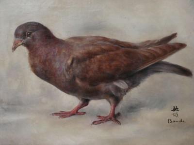 Le pigeon de Toshio Bando